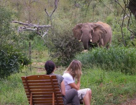 elephants-2