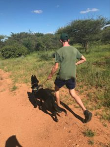 Working with anti-poaching dogs