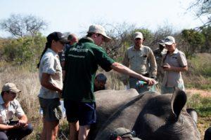 a day de-horning rhinos